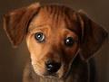 Rescuepuppy